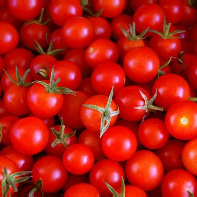 tomate cherry ecologico