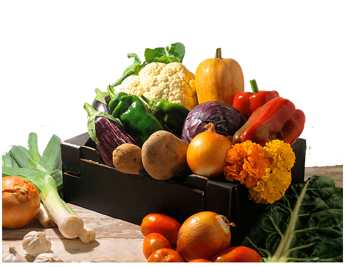 cesta verdura mediana ecologica somnatur