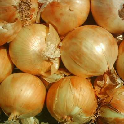 cebolla seca ecologica