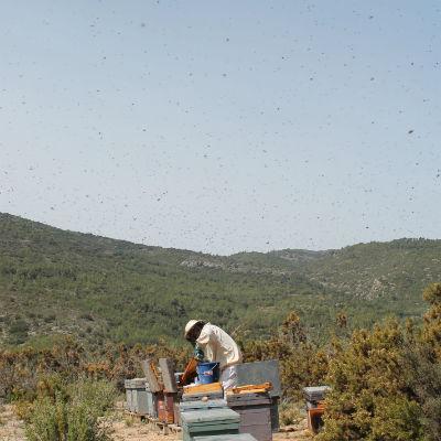 recoleccion miel ecologica