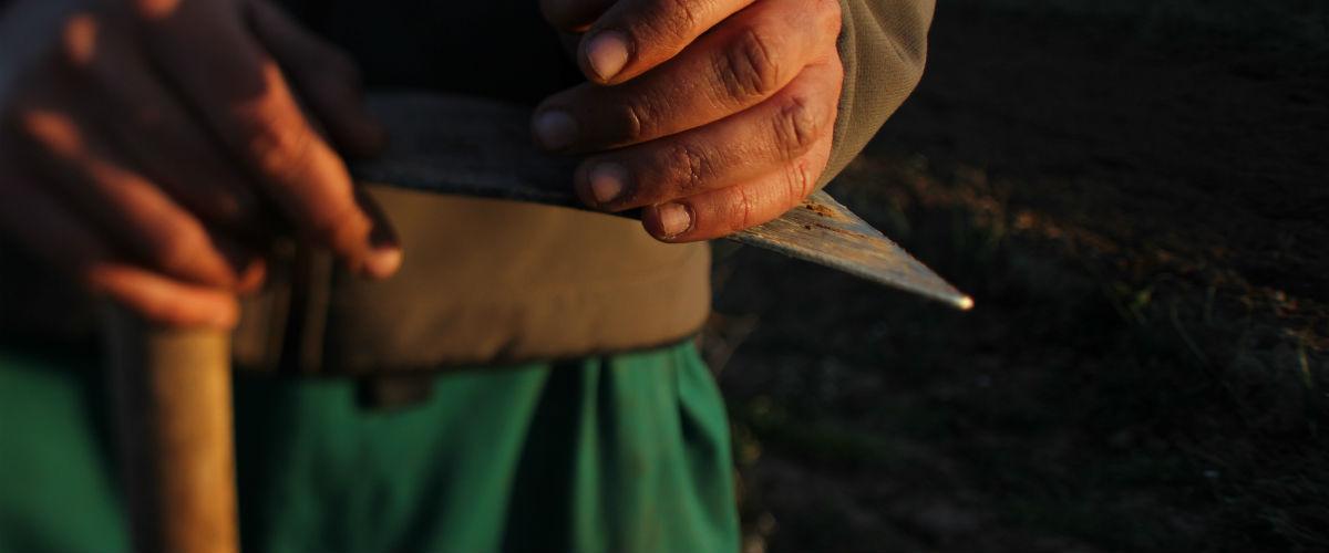manos agricultor ecologico