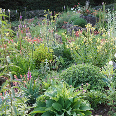 aromáticas ecológicas