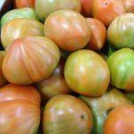 tomate valenciano ecologico