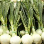 cebolla tierna ecologica
