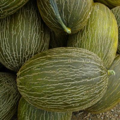 melon piel de sapo ecologico