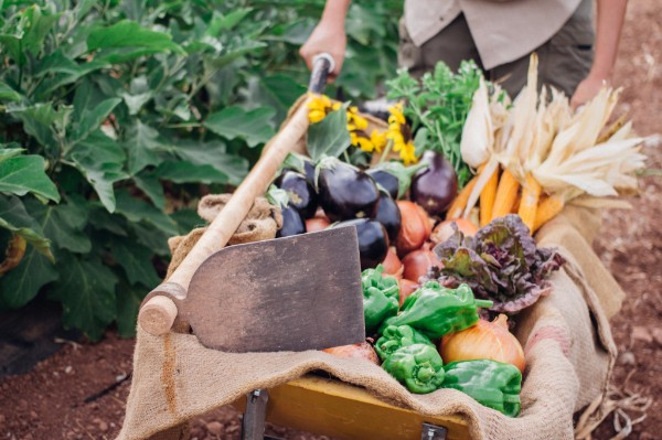 Verduras ecológicas Somnatur