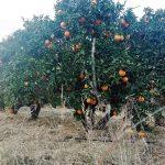 naranja ecológica de zumo