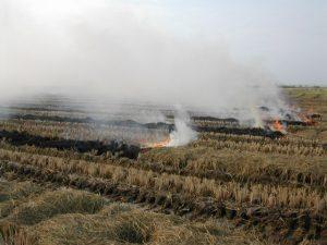 quema paja arroz albufera valencia