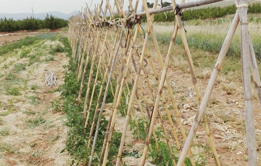 Crecen los tomates | #HuertCam mayo 2018