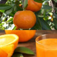 naranja zumo ecologica mandarina ecológica